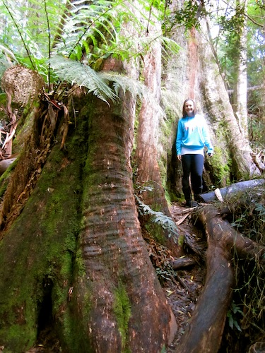 Christine Amorose at Maits Rest Rainforest Walk, Victoria, Australia