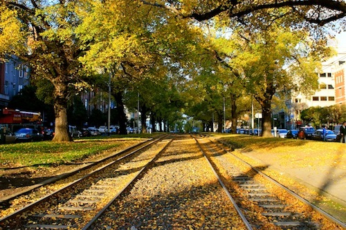 Tree lined tramway in Melbourne, Australia in autumn