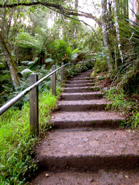 1000 Steps, Dandenong Ranges National Park, Melbourne, Australia