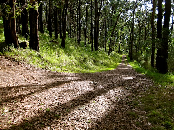 HIking trails in Dandenong Ranges National Park, Melbourne, Australia