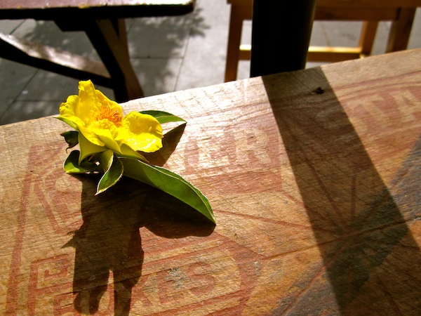 Yellow flower at a cafe in Paddington, Sydney, Australia