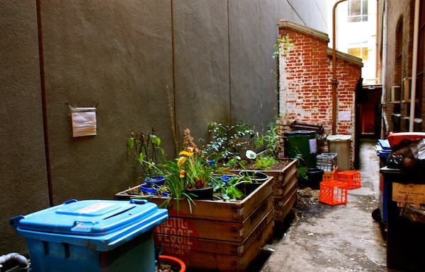 Outdoor garden at Donkey Wheel House, Melbourne, Australia