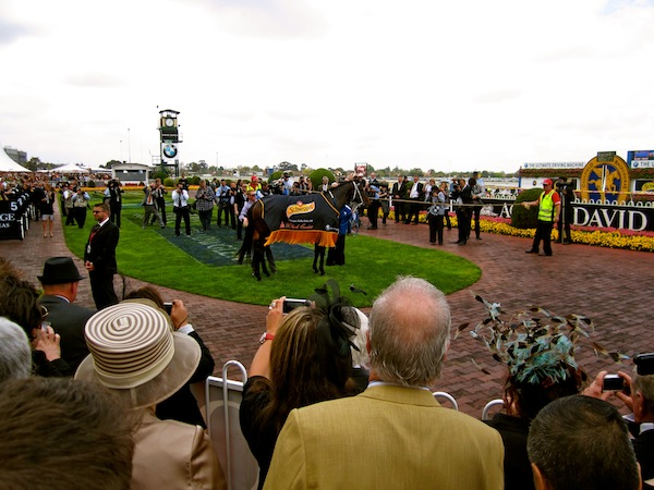 Black Caviar at Caulfield Guineas Day 2011, Melbourne Spring Racing Carnival