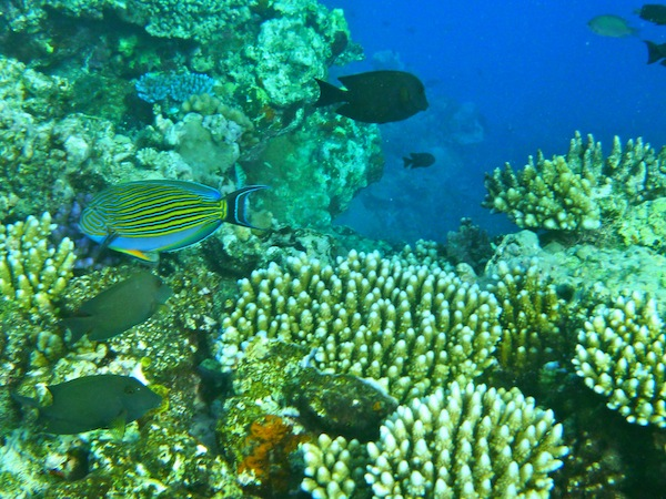 Coral Sea Dreaming, diving the Great Barrier Reef, Cairns, Australia