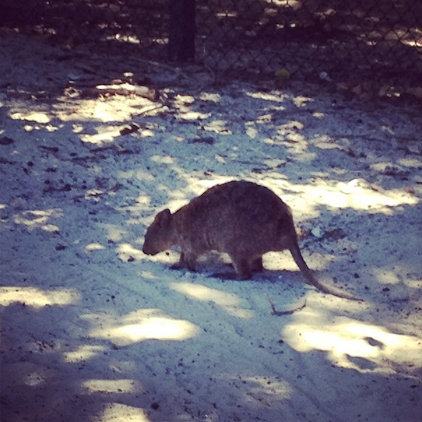 Rottnest Island Australia: Postcard From Rottnest Island L Photos From Perth