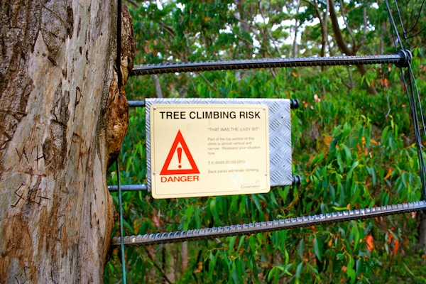 Climbing  the Gloucester Tree warning, Western Australia