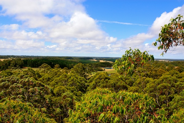 View from the top of Gloucester Tree, Western Australia