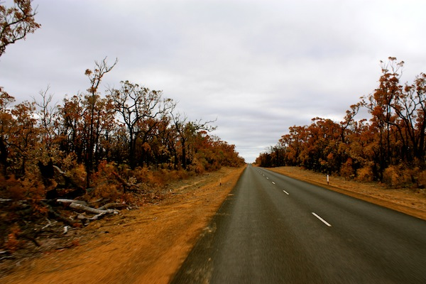 View from the Nullarbor after forest fires, Western Australia