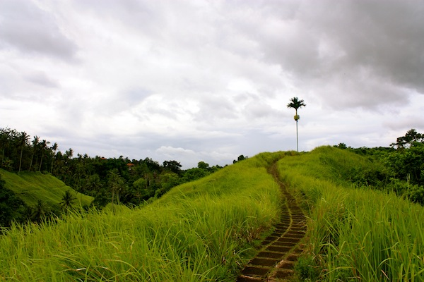 Canyon trekking through green Ubud, Bali on a cloudy day