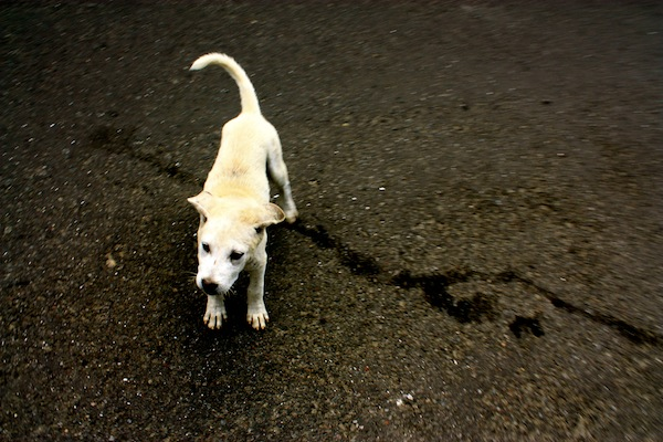 Stray dog in the streets of Ubud, Bali, Indonesia