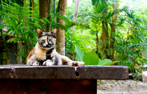 Cat with green eyes in jungle of Tonsai, Railay, Thailand