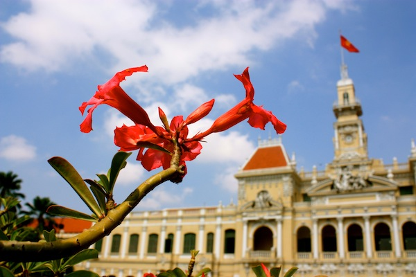 Red flower in front of city hall and blue skies in Saigon, Ho Chi Minh City, Vietnam