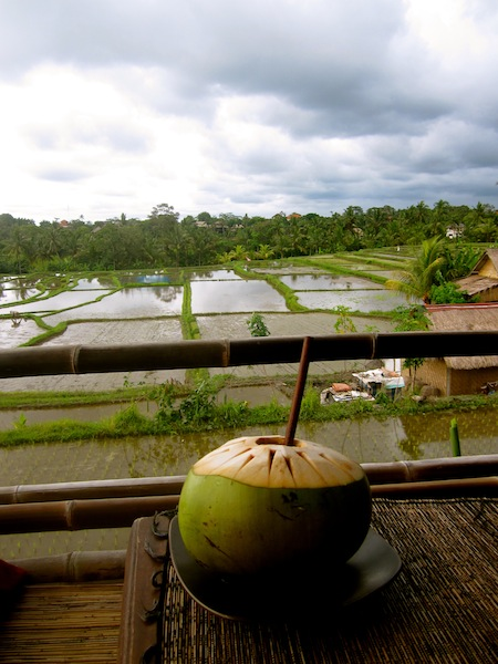 Drinking a coconut at Sari Organic over the rice fields, Ubud, Bali, Indonesia