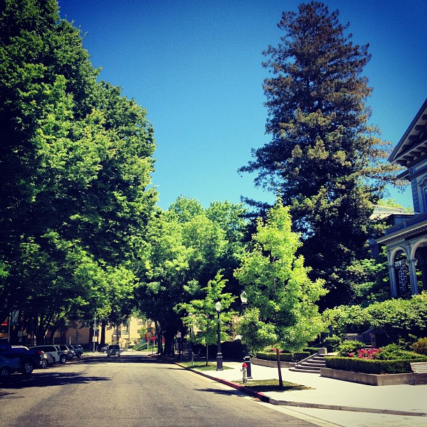 Tree-lined N Street & Crocker Park in downtown Sacramento, California