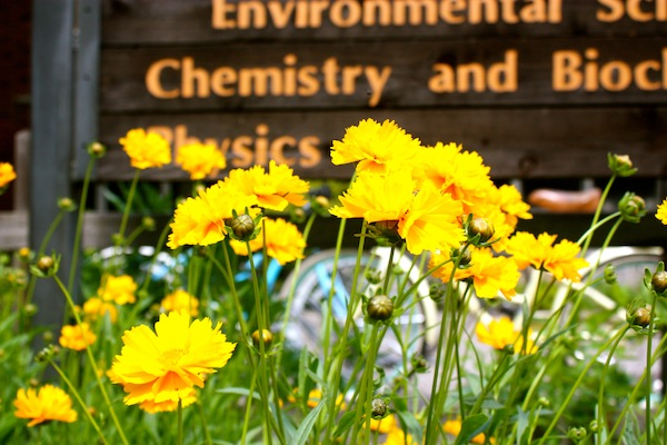 Yellow flowers in front of campus signs at California State University, Chico