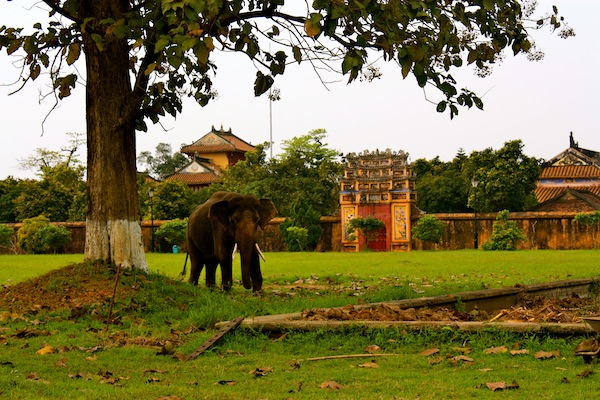 Elephant at Hue Imperial City Citadel, Vietnam