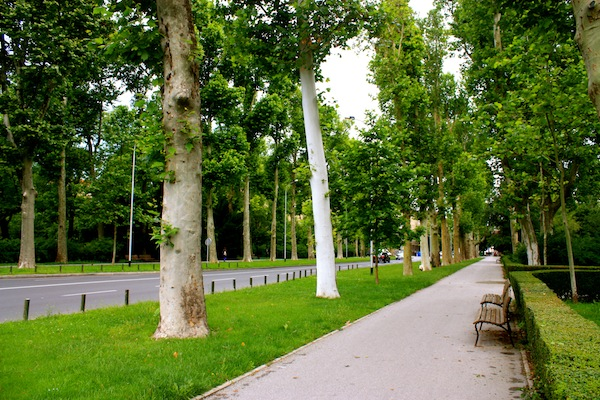 Tree-lined street and benches in Zagreb, Croatia