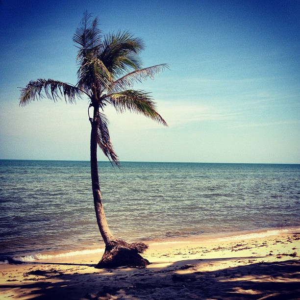 Lone palm tree on Coconut Beach on island of Phu Quoc, Vietnam