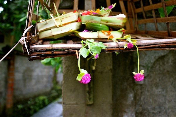 Pop of pink flowers in an offering in Bali, Indonesia