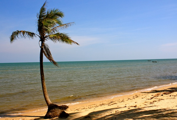 Lone palm tree at Coco Beach on Phu Quoc Island, Vietnam