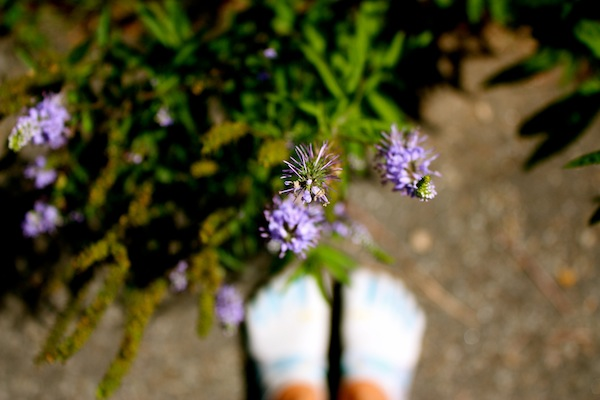 Vibrams and purple flowers at Fort Tryon Park in Manhattan, New York City