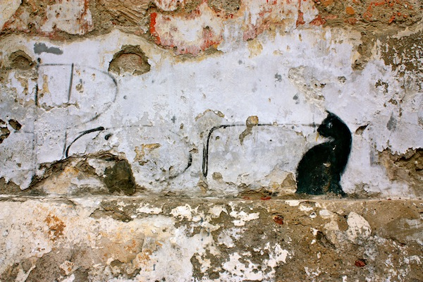 Graffiti art of a cat on the street in Cartagena, Colombia
