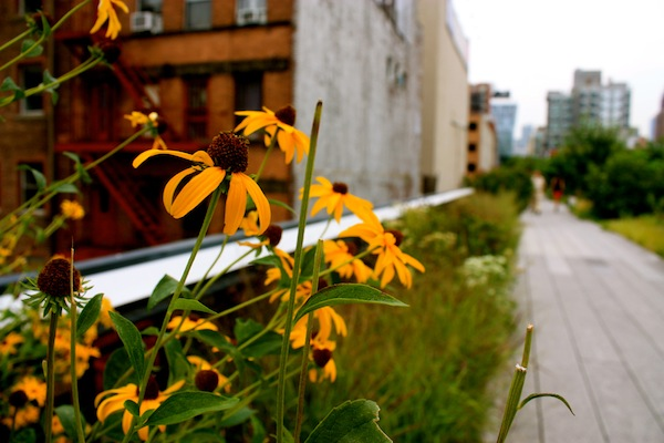 Flowers on the High Line in Chelsea, New York City