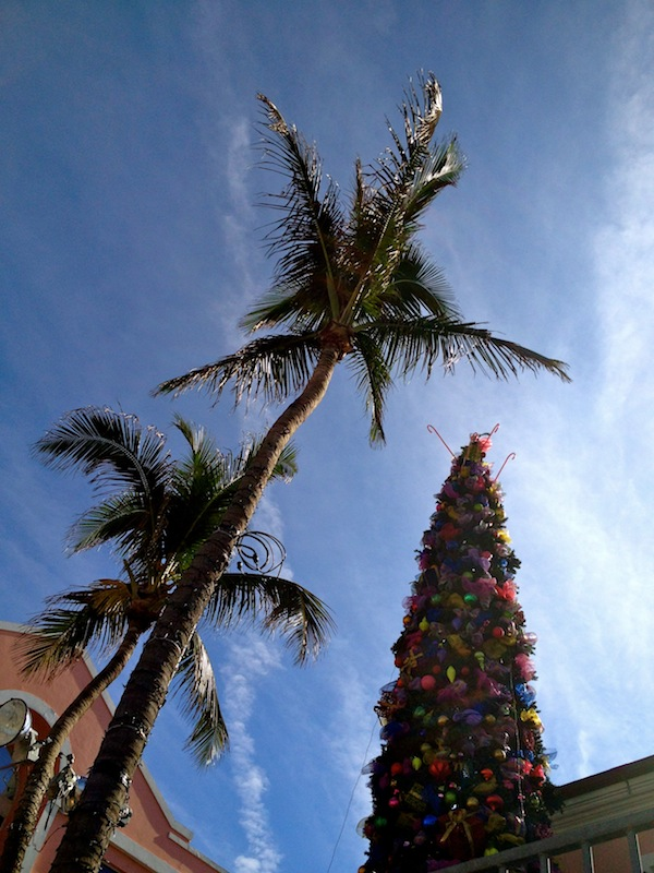 Christmas trees in the Caribbean in Nassau, the Bahamas