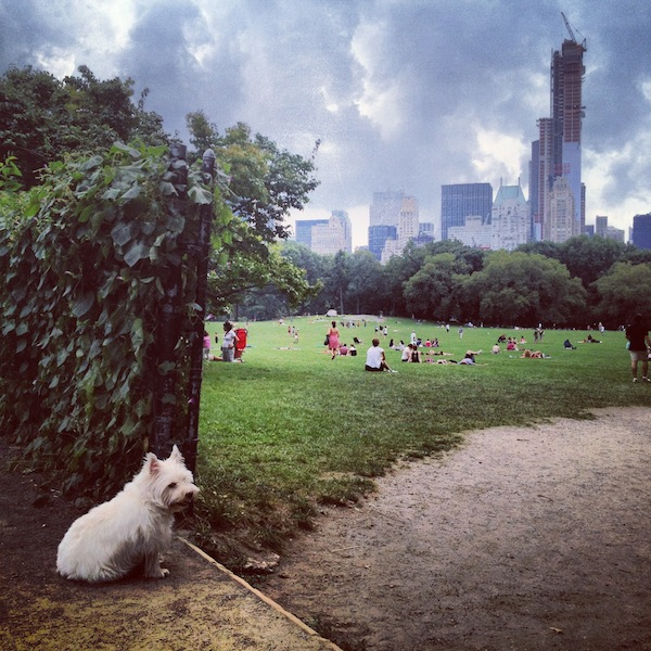 Dog in Central Park on a cloudy day in New York City