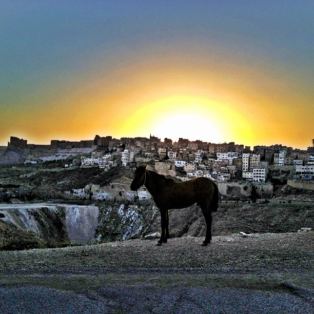 Horse in the sunset at Karak ruins in Jordan
