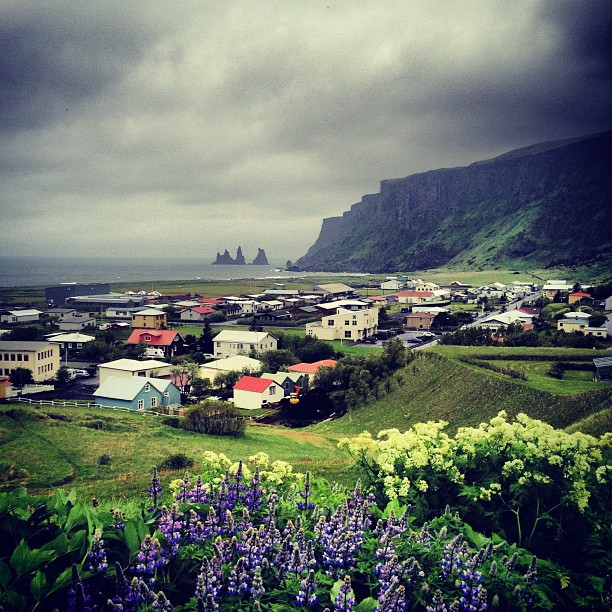 Flowers and clouds over Vik, Iceland