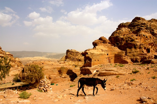 Donkey in the ancient city of Petra in Jordan