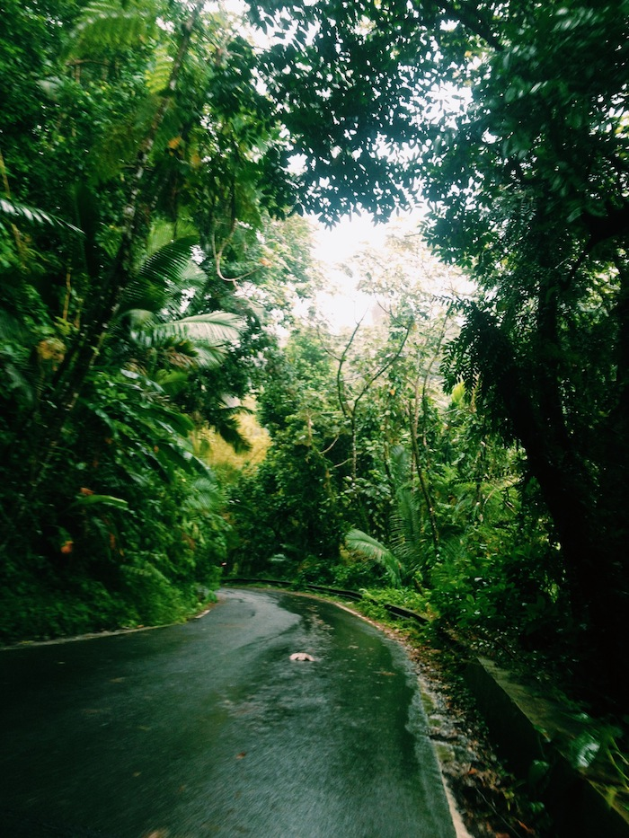 El Yunque Rainforest in Puerto Rico, Processed with VSCOcam with c1 preset