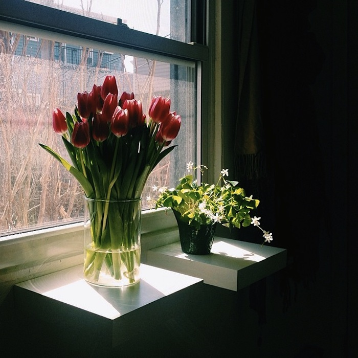 Fresh tulips and a shamrock plant on a sunny window