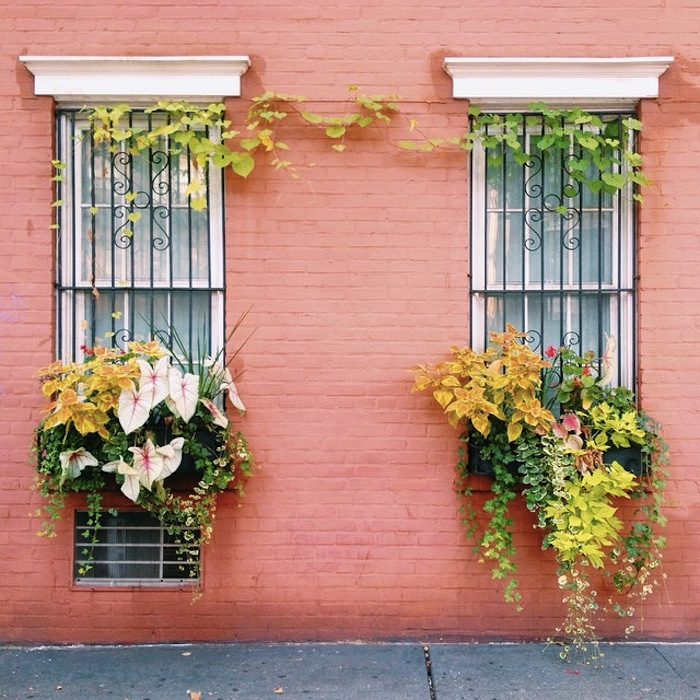 Wall and ferns in the West Village, New York City