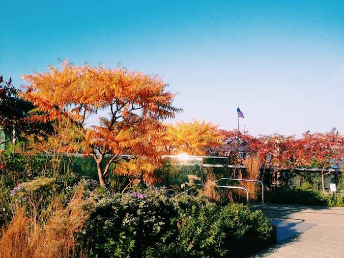 High Line in autumn in New York City