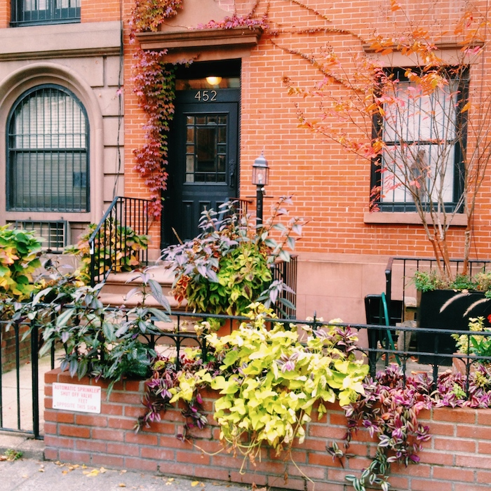 Fall foliage front yard in Chelsea, New York City