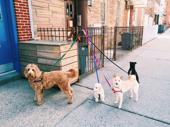 Dog pack in Williamsburg, Brooklyn
