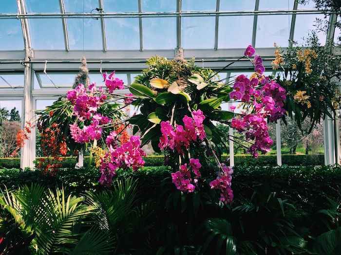 Orchid show at New York Botanical Gardens