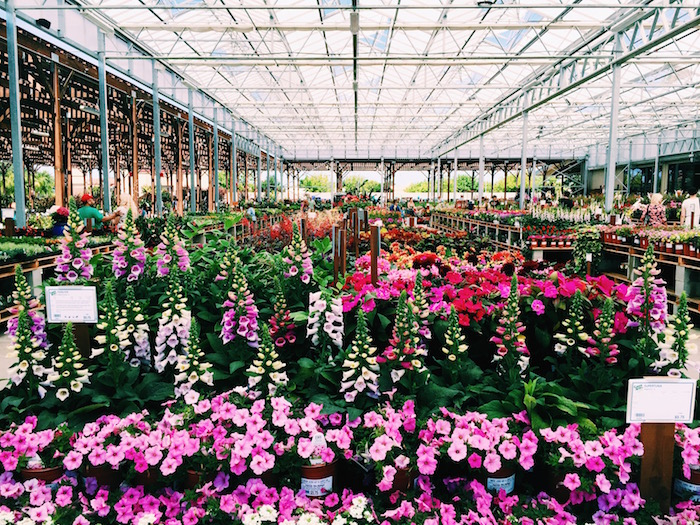 Green Acres Nursery in Elk Grove, California
