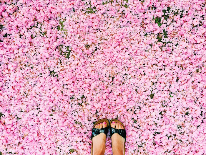 Birkenstocks in pink flowers