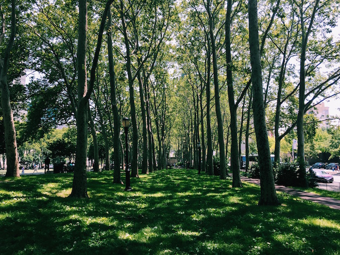 Row of trees leading to Brooklyn Bridge