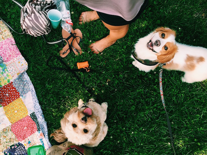 Picnic in Central Park with puppies