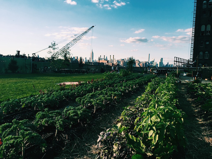 North Brooklyn Farm on Kent in Williamsburg