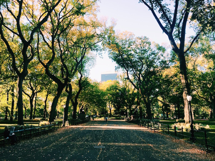 Central Park in the fall in New York City