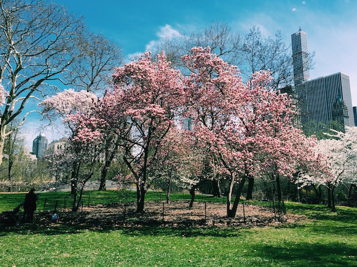 Central Park in the spring in New York City