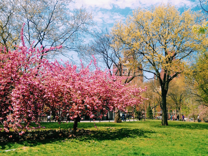 Spring in Washington Square Park, New York City