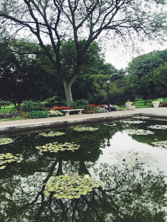 Water lilies blooming at Brooklyn Botanic Garden