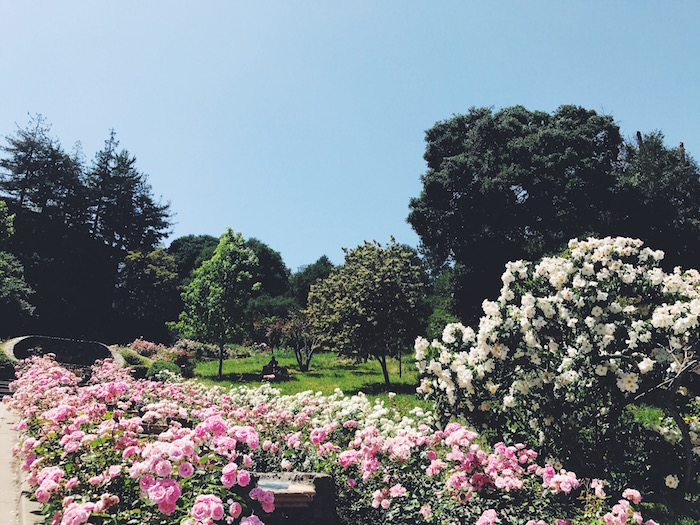 Morcom Rose Garden in Oakland, California