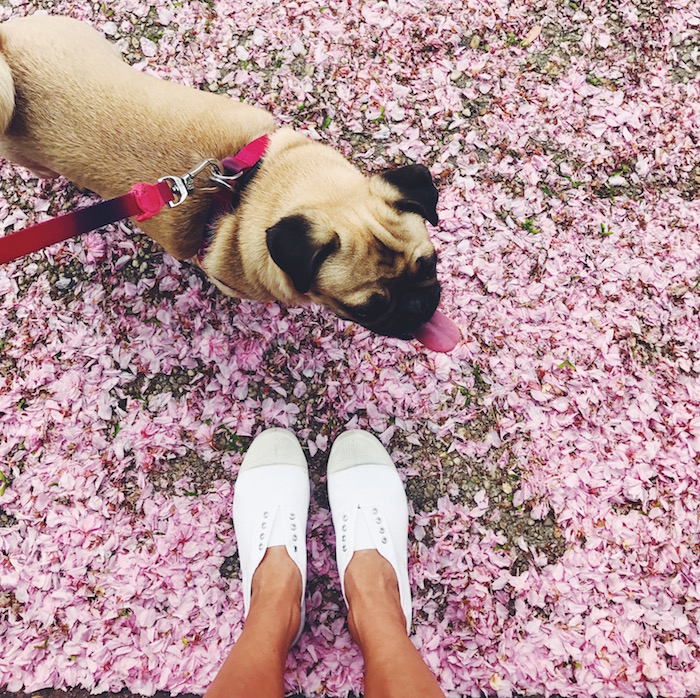 White bensimon sneakers and cherry blossoms